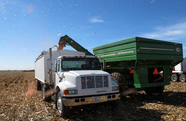 In central Nebraska, a combine unloads harvested corn into a truck. For many farmers, the cost of growing a field of corn remains higher than the amount they can make from it.