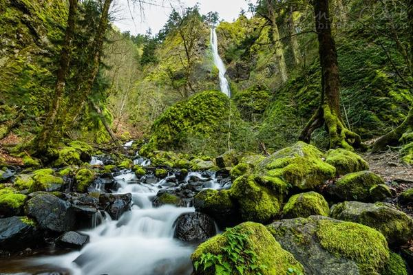 <p>Starvation Creek in the Columbia River Gorge, March 13, 2013.</p>