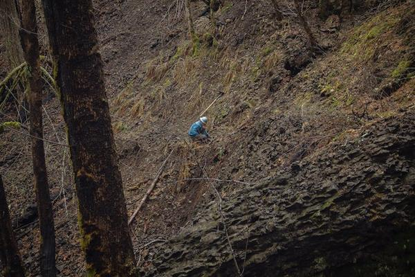 <p>A crew member works on a section of the Pacific Crest Trail damaged in the Eagle Creek Fire.</p>