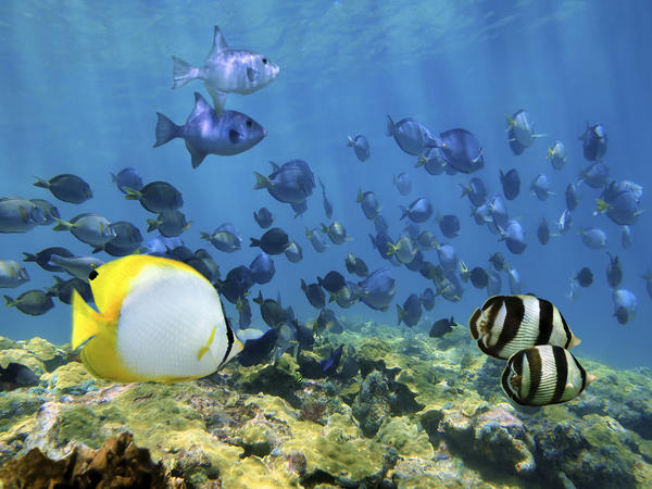 "Shoal of tropical fish over a coral reef in the Caribbean Sea. From pristine forests to vivid reefs, Cuba ""has it all,"" say ecologists eager to study the island habitats."