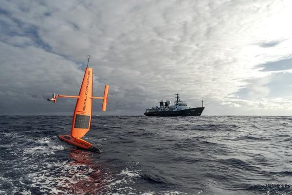 In early March, two months before Falkor departed for the same mission, two saildrones were deployed from San Francisco. They have been transmitting data in real time, listening for the acoustic tags that researchers attached to great white sharks and using sonar to detect other creatures deep under the surface.