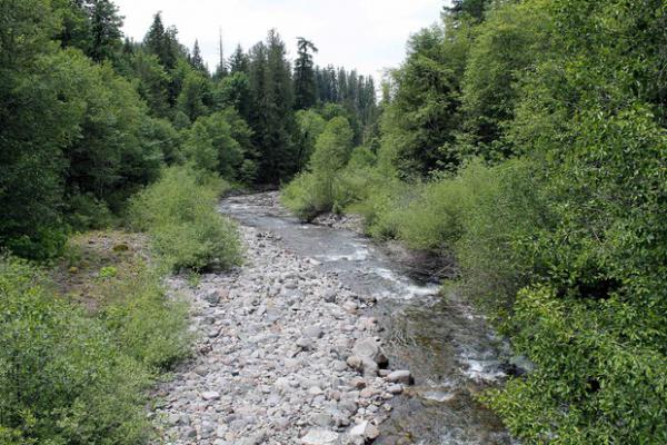 <p>Lookout Creek in Oregon's H.J. Andrews Experimental Forest.</p>