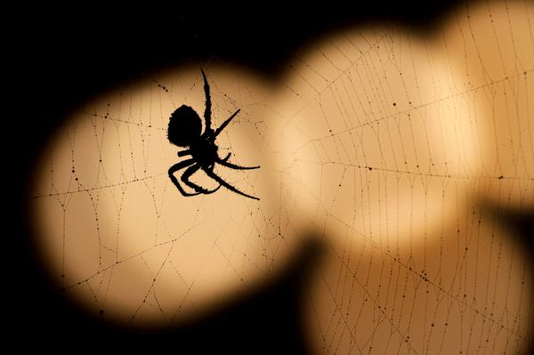 A spider is silhouetted against a string of lights in Overland Park, Kan. (Charlie Riedel/AP)