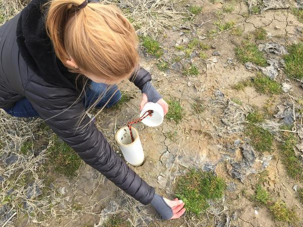 Kate Tully of the University of Maryland checks a device that measures groundwater level and salinity. Saltwater has degraded this farmland, leaving patches of microbial crust.