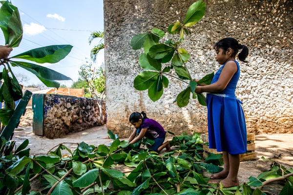 Ruby helps to clean the backyard of her grandmother's home in a small Maya village in Yucatán, Mexico.