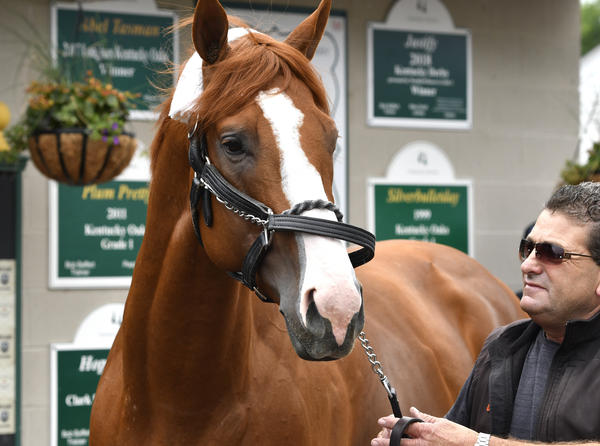 Triple Crown winner Justify, is led around in front of his barn by assistant trainer Jimmy Barnes following his arrival at Churchill Downs, Monday, June 11, 2018, in Louisville, Ky.