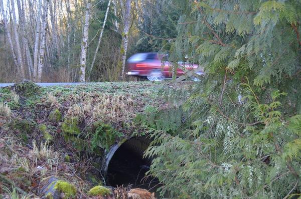 <p>This road culvert is too small for the stream it carries, causing the roadbed to erode.</p>