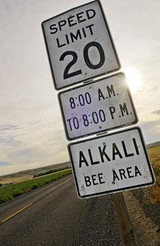 <p>During the alkali bee season in June, speed limits are lowered on country roads around Walla Walla County.</p>
