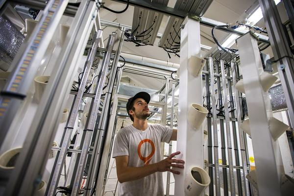 STEM Cultivation co-founder and chief technology officer Chris Denaro slides PVC columns, each one holding up to 12 cannabis plants, into the center aisle of the STEM Box. (Jesse Costa/WBUR)
