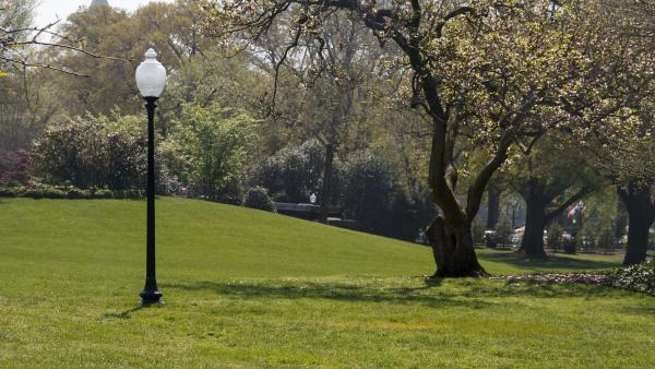 A photo shows the empty area where an oak tree was planted by President Trump and French President Emmanuel Macron days earlier on the White House's South Lawn.