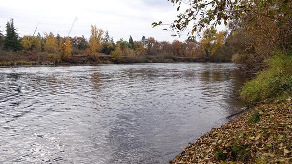 <p>Rogue River just upstream of Medford's wastewater treatment plant.</p>