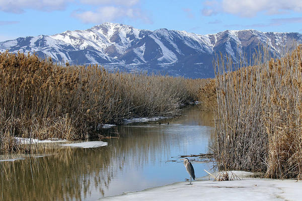 The Bear River Migratory Bird Refuge in Utah is on the list of places where hunting would be expanded.
