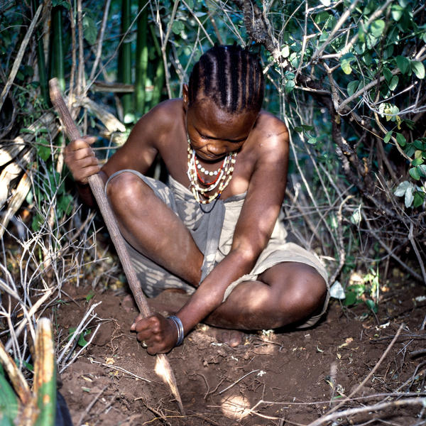 A Hadza woman digs for tubers with a digging stick.