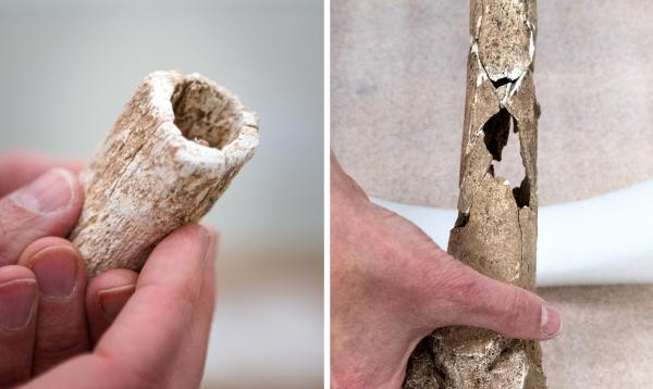 The limbs had been evenly cut (left), and researchers were able to identify bullet holes (right).