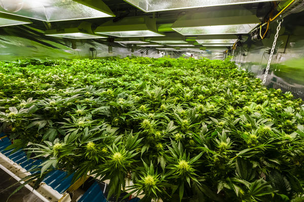 A drug made from a derivative of marijuana has been approved for patients with certain forms of epilepsy.