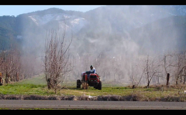 <p>Cloud of pesticides surround pear orchard worker in the Rogue Valley. Farmworker advocates say this kind of spraying can cause pesticide drift. </p>