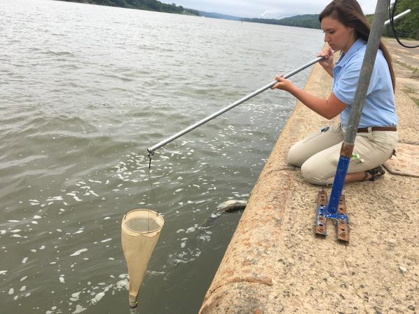 Daily water samples, like the one Thomas More Senior Emily Urichich is taking, can confirm if cameras are seeing algal blooms on the Ohio River.