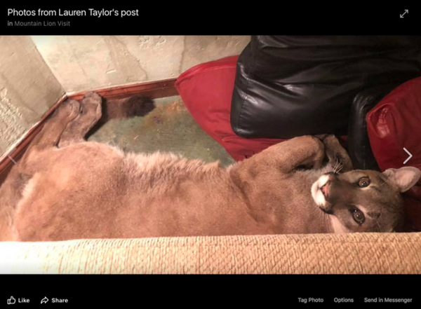 <p>Screenshot of a Facebook photo. It is one of several images and video clips posted to Facebook by an Ashland woman on July 7, 2018, along with a post describing an amicable encounter with a cougar inside her house.</p>