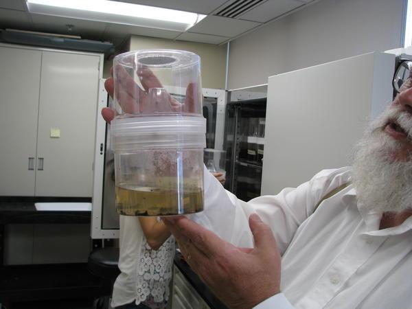 MSU Professor Dr. David Claborn Holds a Mosquito Emergence Tank