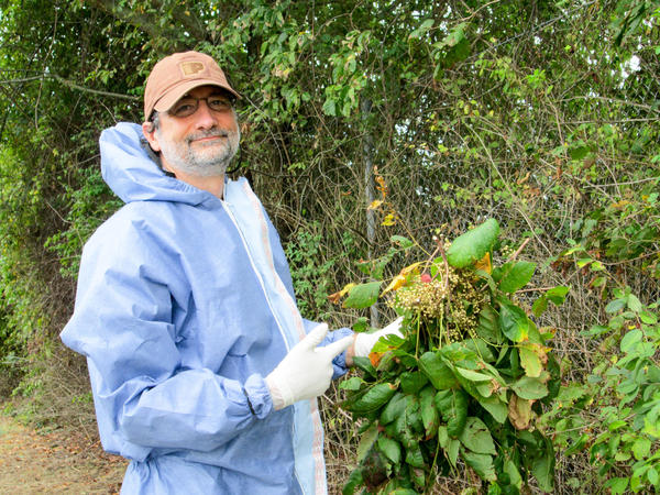 Microbiologist John Jelesko has learned not to take any chances when he touches poison ivy.