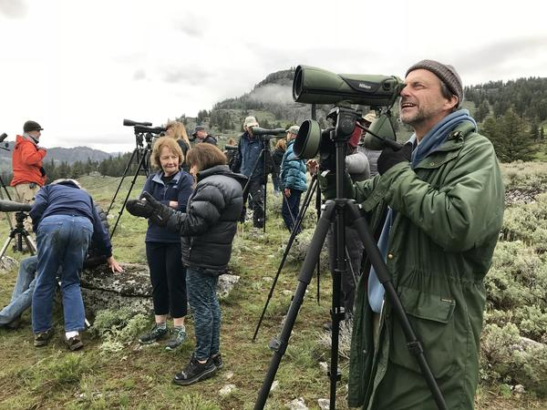 Mike Engel watches a pack of wolves in Yellowstone National Park's Lamar Valley.