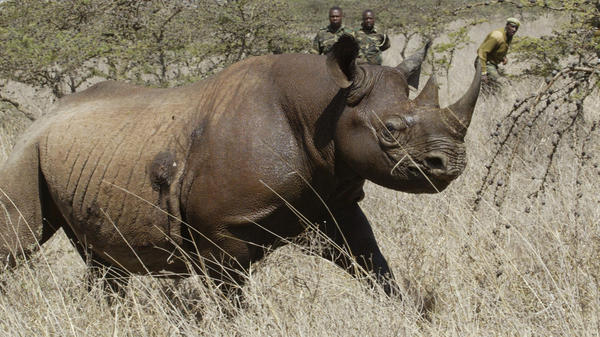 Eight critically endangered black rhinos died following an attempt to move them from Kenya's capital, Nairobi, to a national park hundreds of kilometers away.