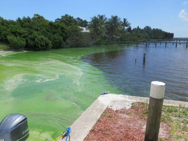 Toxic algae blooms plagued the Indian River Lagoon in 2016.