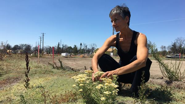 Memories of last year's fire can still feel overwhelming, says Danielle Bryant. But her flattened neighborhood is also coming back to life. Here, in the yard of her old home in Santa Rosa, green sprouts now push through the blackened decay.