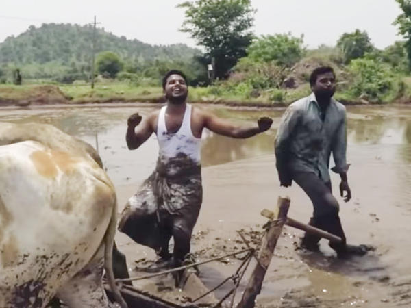 "Farmers do their version of the Kiki Challenge, dancing to Drake's song ""In My Feelings."" In the mud. With oxen."