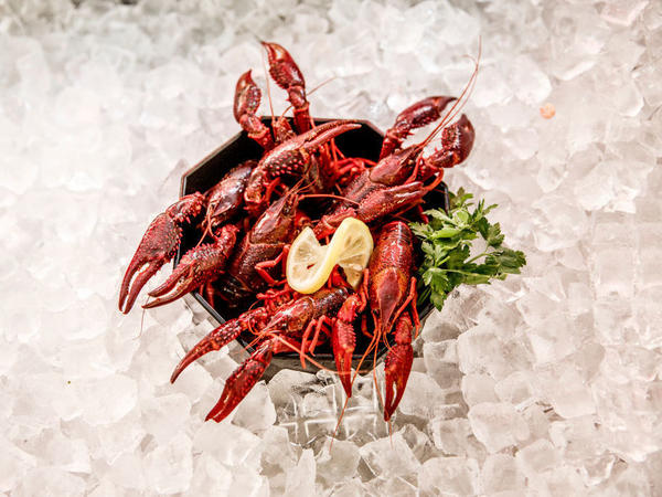 Louisiana crawfish caught in waters in and around Berlin are on display at Fisch Frank fish restaurant in Berlin. They are an invasive species and authorities recently licensed a local fisherman to catch them and sell them to local restaurants.