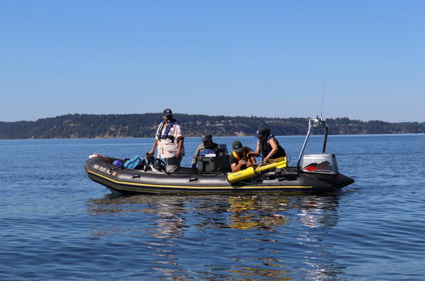 Volunteers with the Maritime Archaeological Society recover their magnetometer after scanning the seafloor near Steilacoom, Washington, on Saturday.