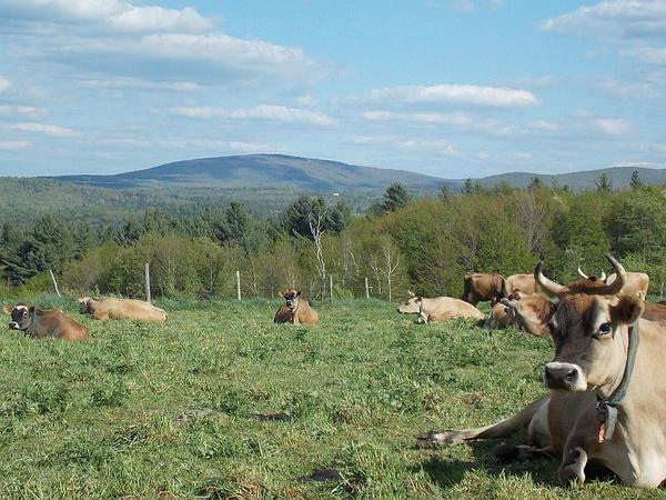 Vermont has lost 66 dairy farms this year, and that has prompted farmers to consider news ways to stay in business by controlling the over-supply of milk.