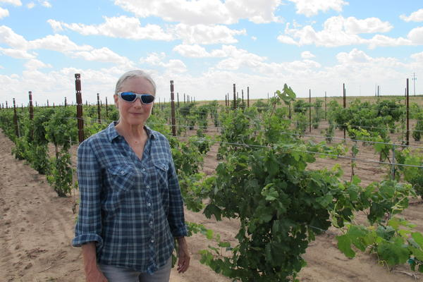 Andis Applewhite's vineyard near Lockney, Texas, has been hit multiple times by herbicide drift.