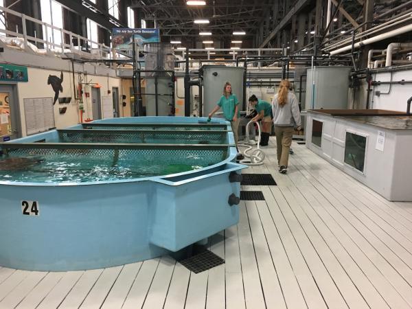 Volunteers and staff at New England Aquarium's sea turtle hospital.