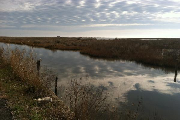 Salt marsh, which accounts for about 70 percent of Tangier's area, stretches across the island's southern edge. As Tangier sinks and the surrounding bay rises, such wetlands are drowning and becoming open water, leaving the island without the buffer that has long protected it from storms.