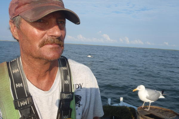"James ""Ooker"" Eskridge at the helm of his boat, the <em>Sreedevi</em>. The seagull's name is Yellow Bill. He's a frequent hitchhiker."