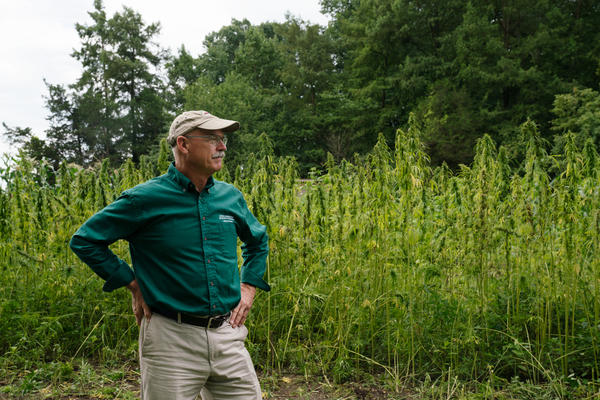 Dean Norton, the director of horticulture at Mount Vernon, stands in front of the plot of hemp grown this year.