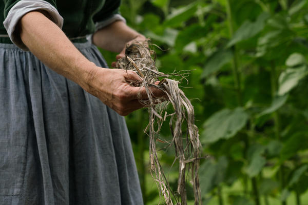 Hemp historians say the exceptionally strong fibers could be used for making sails, repairing fishing nets and clothing slaves.