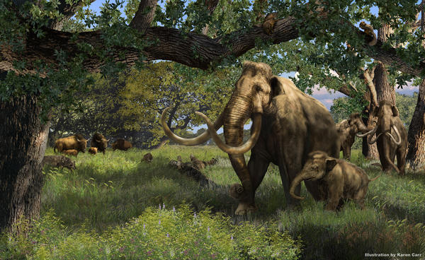 <em>Mammuthus columbi, </em>the Columbian mammoth, used to be common in America, but went extinct about 10,000 years ago. The specimen found south of Dallas is estimated to be 20,000 - 40,000 years old.