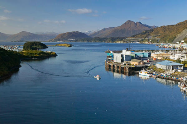 But the cod decline could be a disaster for Kodiak. With boats traveling more than 1,000 miles away to find fish, crews aren't stocking up at stores in town, and boats aren't paying the local fish tax.