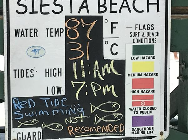 Many beachgoers at Siesta Key have been ignoring warnings that swimming is not recommended because of red tide.