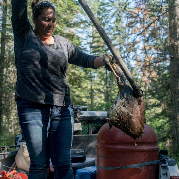 "Kari Eneas, a wildlife biologist for the Confederated Salish and Kootenai Tribes, fishes a deer leg out of the ""bait bucket"" in Montana's Mission Valley."