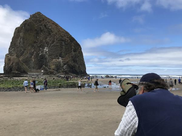 Volunteer Art Broszeit peers through a high powered scope trained on Haystack Rock, where the tufted puffins nest for the summer.