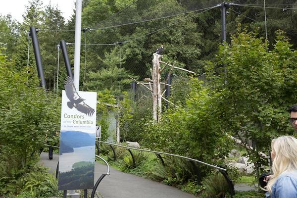 <p>The entrance to the condor exhibit at the Oregon Zoo. The zoo has 38 condors – three on exhibit and the remainder in the Jonsson Center for Wildlife Conservation in Clackamas County.</p>