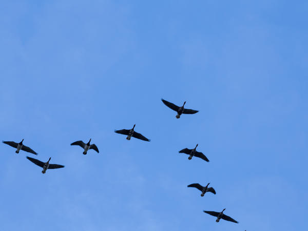 A new tool predicts where birds will migrate based on the weather.