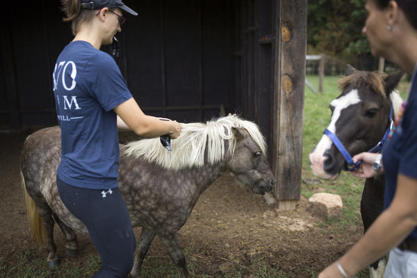 Breindel (left) puts an identification tag in a horse's mane as McKee leads up another horse in advance of the storm. The staff has microchipped all of the animals, given them identification tags, ordered a two-week supply of food and secured all of the shelters on the property.