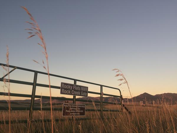 The U.S. Fish and Wildlife Service says Rocky Flats hosts 239 migratory and resident species from Falcons and Elk to the threatened Preble's meadow jumping mouse.