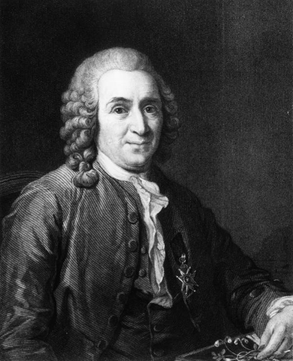 "Swedish physician and botanist Carl Linnaeus, who coined the term ""Homo Asiaticus,"" using ""Luridus,"" or pale yellow, to describe Asians as well."