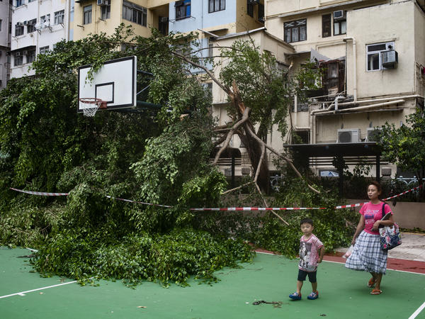Mangkhut damaged trees and buildings throughout Hong Kong.