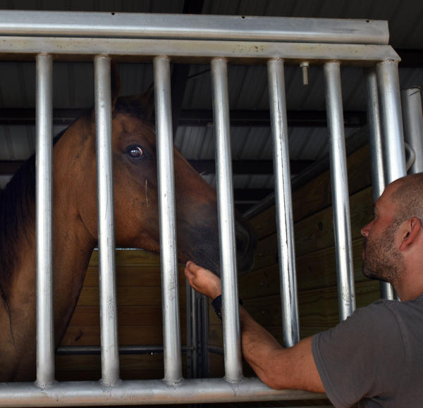 A rescued horse is cared for at a staging area in Lumberton.